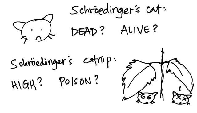 also known as Schroedinger's catmint